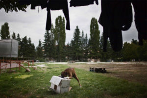 Michele Palazzi, The last Tents