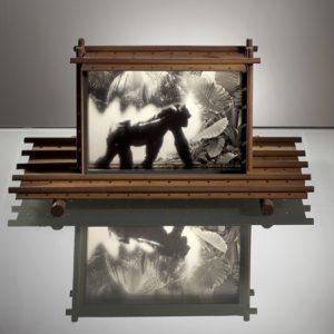Gorille, la cage oubliée © François Delebecque
