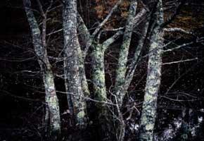 photographe, photographie, residence, editions filigranes, anomalas, nature humaine pour la photographie