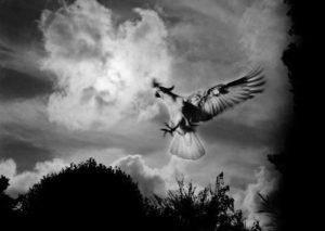 © Trent Parke