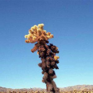 Joshua Tree, California - 2014