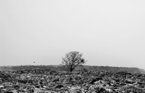 Kolkata,India-March 2016:Life in the Wasteland-Wastes littered and dumped in the open forming a heap of rubble affect plants and animals in the surroundings. The soil in certain places has lost its fertility turning the land barren.