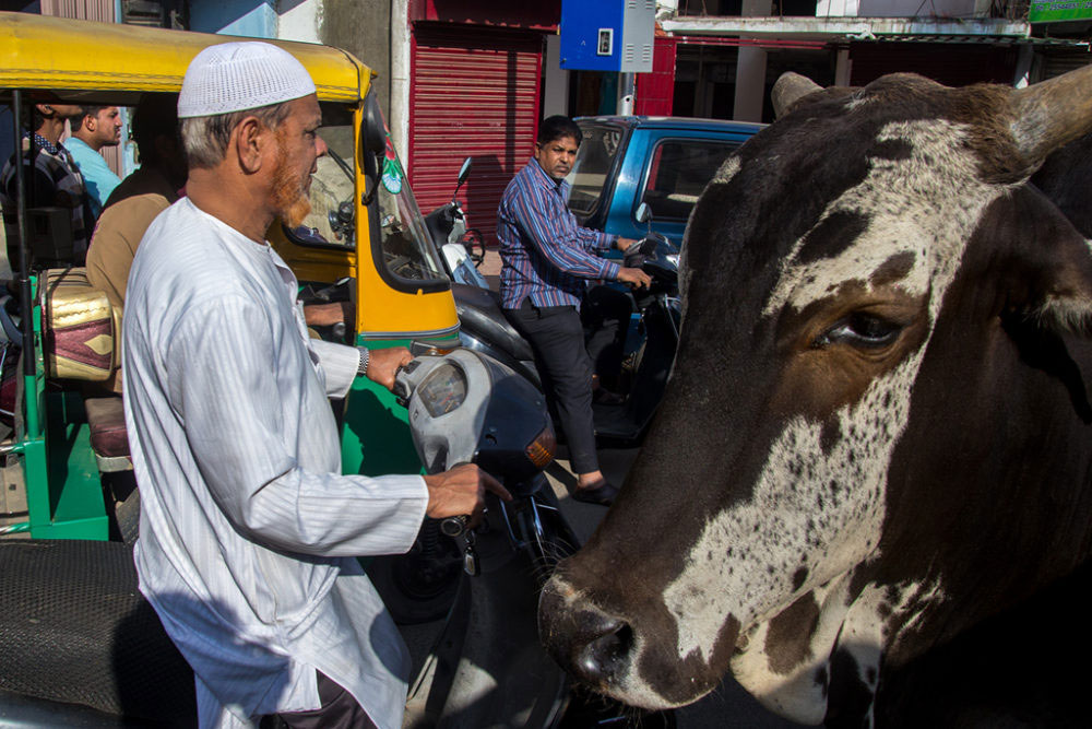 Bangalore, India - May 2015 - Traffic in the city where cows, bike, ricksaw share the road