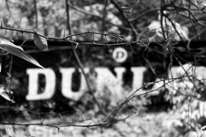 Dunlop's Sahaganj Estate March, 2015 - The Thorny Reality of a Past Glory
