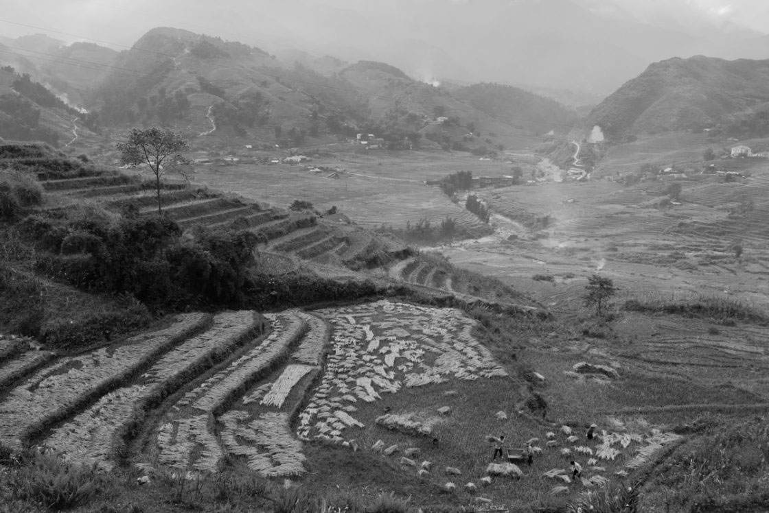 mountainland viet se photographs photo essay by sascha richter lao cai province vietnam 2016 a family is doing harvest work on their field close to a river running through a valley rice is the main