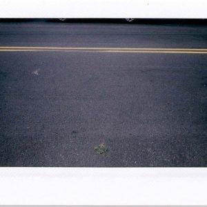Brooklyn, New York City- August 2012. Leaf.