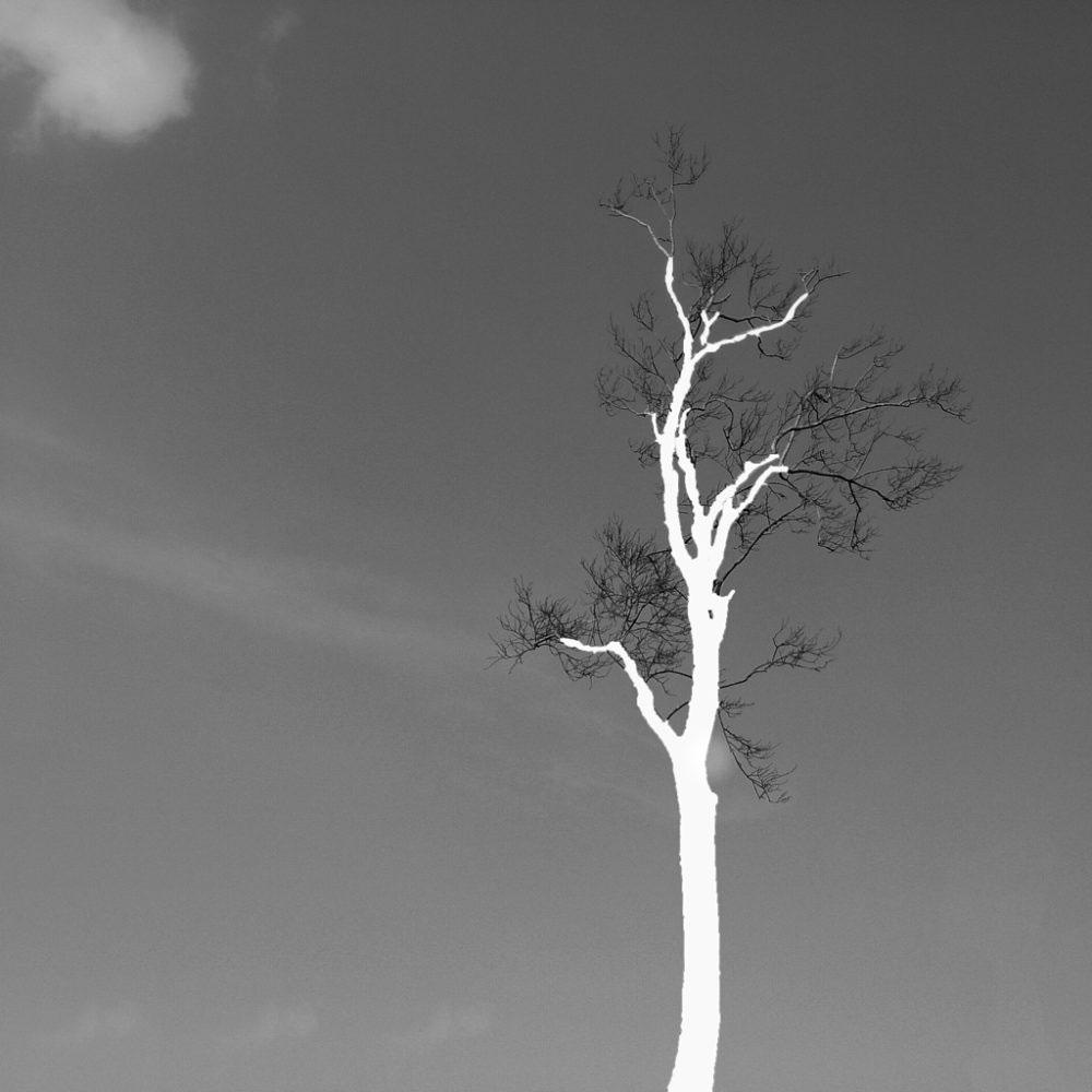 Lone Tree, 2015, Kuakata