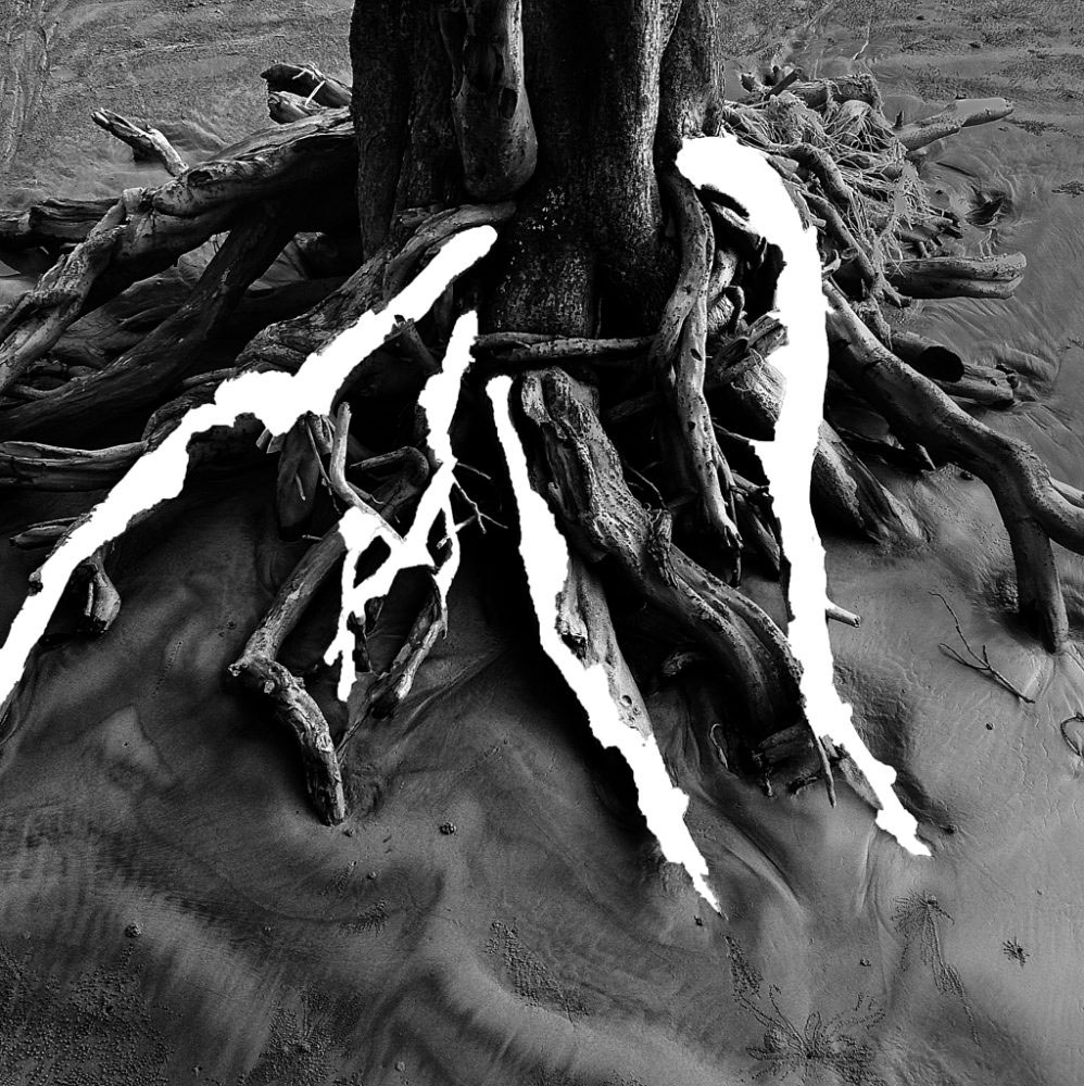 Faded Roots, 2015, Kuakata