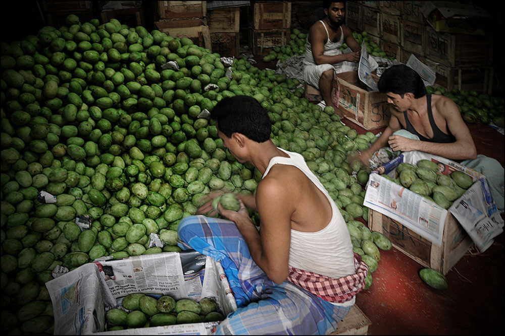 April-May 2015, Kolkata : Juicy and sweeter: Workers busy packing mangoes that have arrived from North India, at Mechua – the wholesale fruit market in Kolkata.