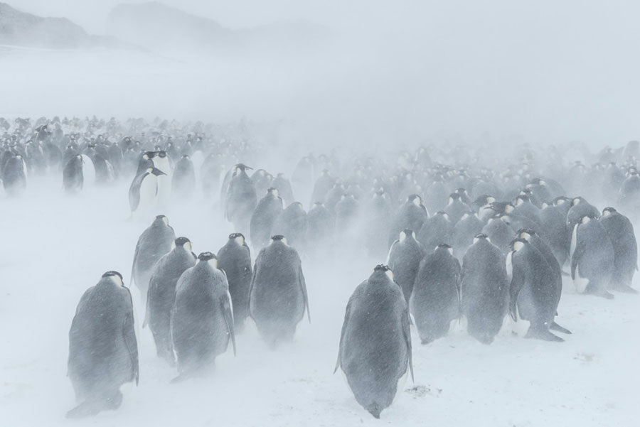 "Fabuleux Vincent Munier ""Antarctica"" • PRIVATE - photographers and writers YH74"