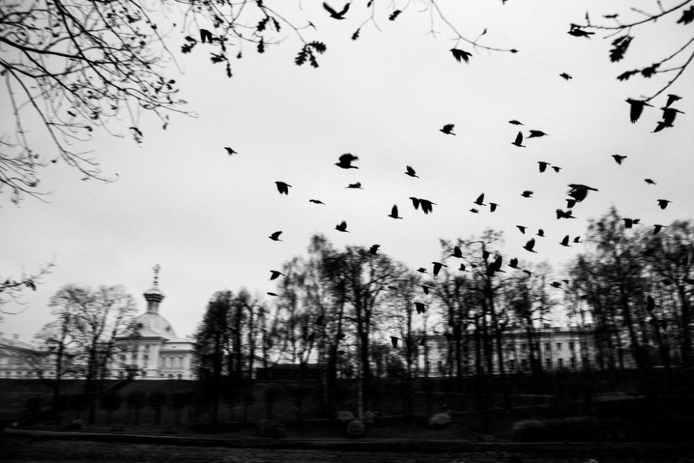 Peterhof, Russia, November 1, 2015. Birds are frightened.