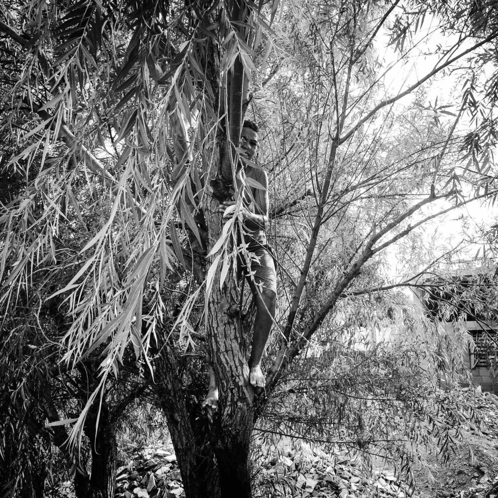 A shirtless boy in a tree,July,Relizane,1st,2016.