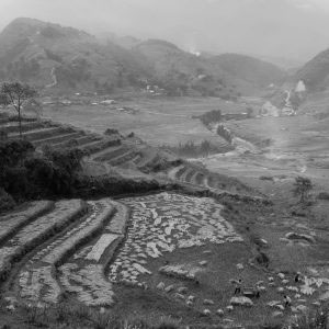 Lao Cai Province, Vietnam - October 2016. A family is doing harvest work on their field, close to a river running through a valley. Rice is the main, and for some poor families the only, source of nutrition in the region. Harvesting season is the most crucial time of the year. The whole family works together to ensure the family's supply of food for the coming year.